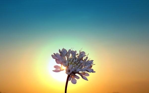 flower-in-morning-sunshine-3060x1905_101688
